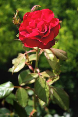 blomster til begravelse 2
